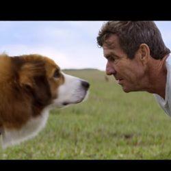 電影《為了與你相遇》心得:認識的人越多,我就越喜歡狗..