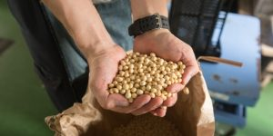 「豆中之王」黃豆富含蛋白質,補脾益氣,清熱解毒..黃豆的營養/好處/功用/成分《癌後營養學》