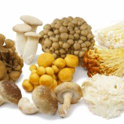 經常食用「菇類」(洋菇,舞菇,香菇,秀珍菇..)能降低女性得到乳癌的風險!!《吃出超級免疫力》