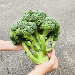 哪些人該多吃綠色花椰菜?保護視力、皮膚美白、遠離癌症..