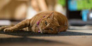 睡眠二三事:晚上就是睡不著?夜貓子是怎麼形成的?跟「晚餐」有關..