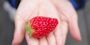 「水果皇后」草莓豐含維生素C 草莓功效/功用/營養價值/成分..《癌後營養學》