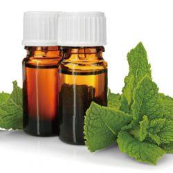 5款最受歡迎的精油推薦功效整理:薄荷、迷迭香、茶樹、乳香、茉莉精油