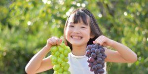 「果中之珍」葡萄含花青素,兒茶素..葡萄功效/功用/營養價值/成分《癌後營養學》